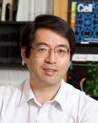 Yoshikisasai