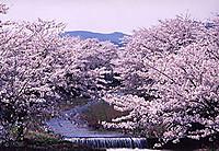 Sasaharagawa