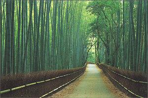 Kyoto_sagano