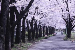 Koriyama4